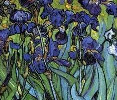 Iris, i fiori dell'arcobaleno.